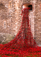 Blood Swept Lands and Seas of Red WW1 Memorial at the Tower
